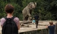 """世界大象日:卢布尔雅那动物园里的亚洲象""""恒河"""""""