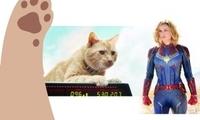 漫威电影《惊奇队长》领跑票房 有一种猫站稳银幕C位