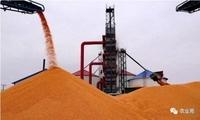 """玉米市场存在诸多""""不稳定因素"""",短期内价格""""跌涨互现""""!"""