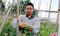 贵州独山:产业兴起来 家园靓起来 村民笑起来