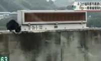 日高速公路上演捕猫大战 交通管制1小时场面混乱