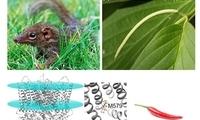 昆明动物所等揭示树鼩耐受辛辣食物的分子机制