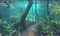 巴西森林被河水淹没变成美妙水府,小鱼在树林间游弋