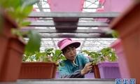 红土地上新活力——写在《国务院关于支持赣南等原中央苏区振兴发展的若干意见》实施五年间