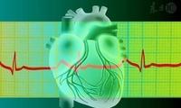 心跳多少的人最长寿?