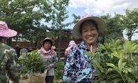 桂园扶贫一周年:带动超20万人实现增收脱贫