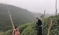 贵州贵定气象服务人员深入茶场调研