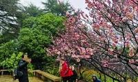 无锡梅园梅花节开幕 万株梅花盛放三成,已进入最佳观赏期
