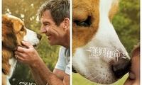 《一条狗的使命2》17日上映 可能是今年最治愈的108分钟